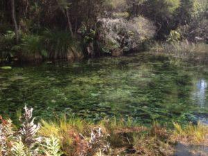 Die Geschichte der Maori zu einer Quelle